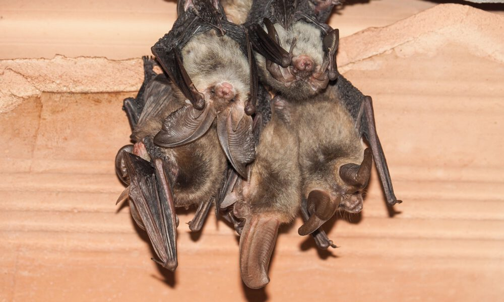 how to get rid of bats