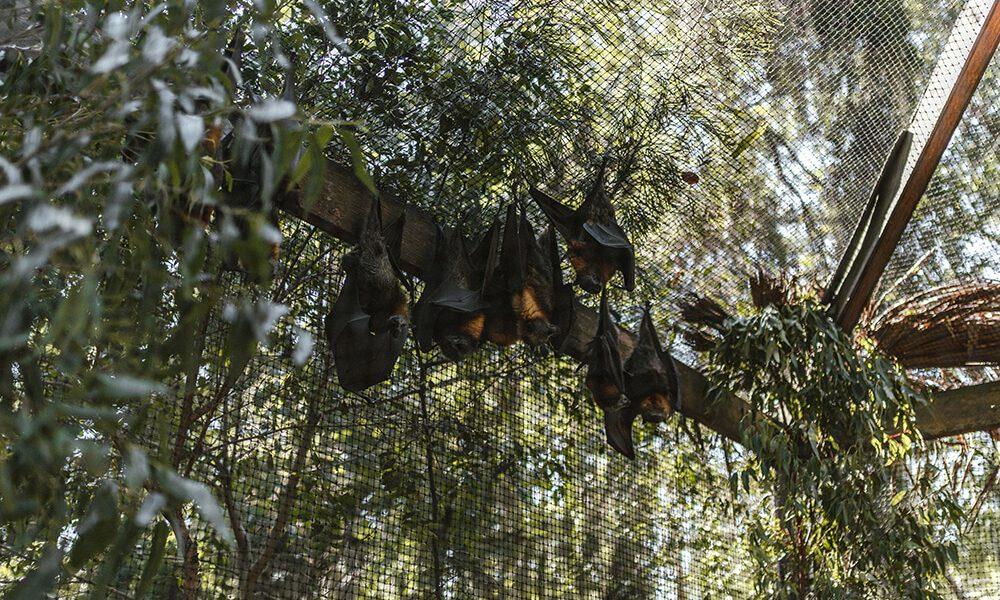 most common bats