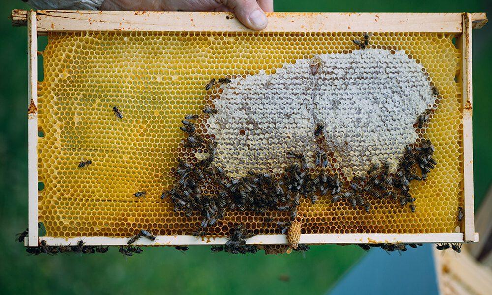 how do bees make honey