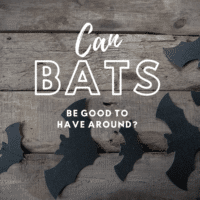 can bats be good