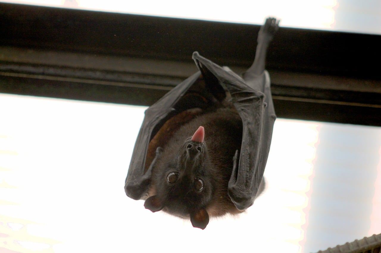 Can Bats Be Good