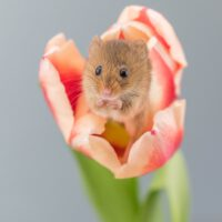Spring Rodents