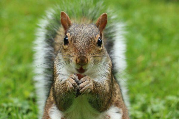 Squirrels Pets or Pests